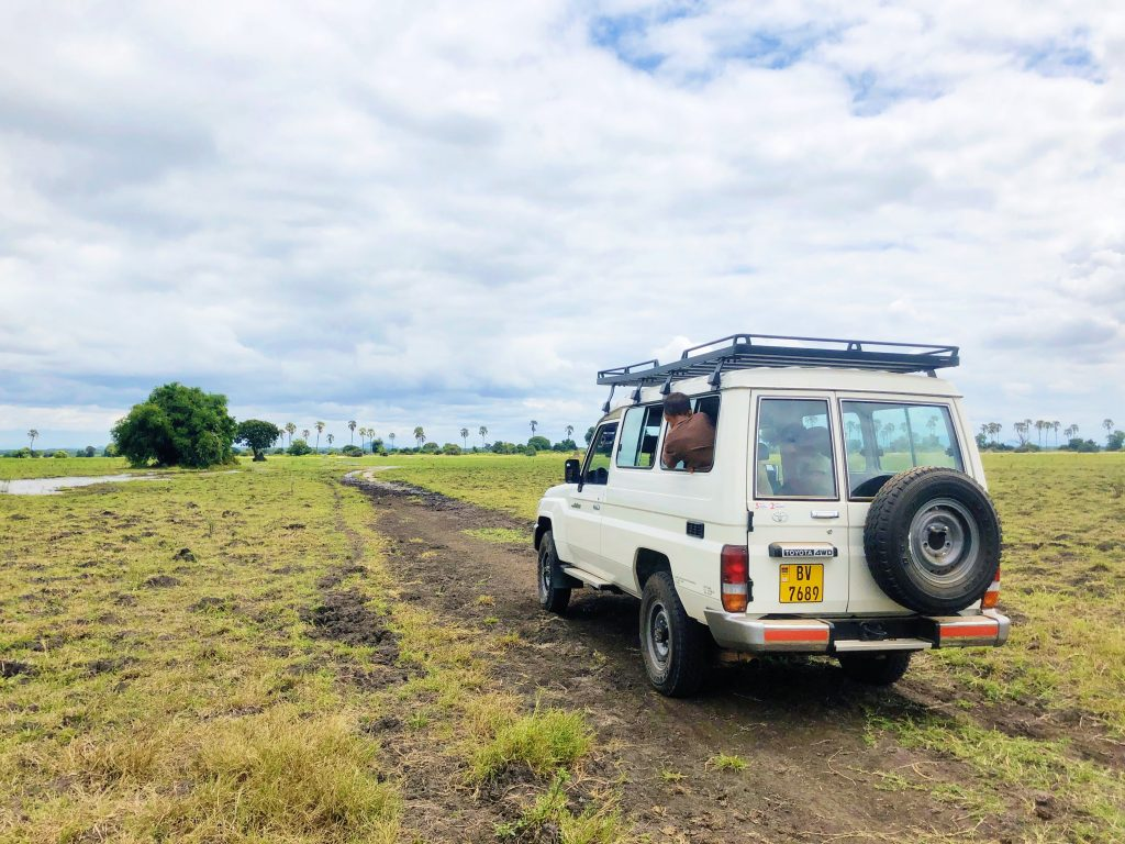 On safari at Liwonde National Park in Malawi a white land cruiser drives a dirt road through the savannah toward the shire river to see animals